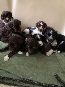 Melitta's litter Family photo